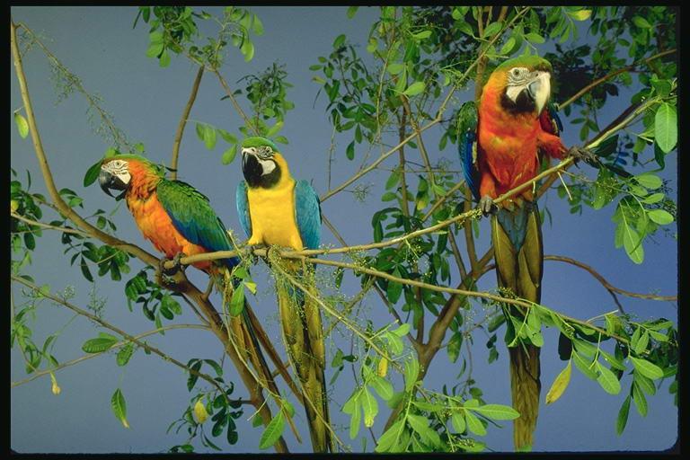 Картинка 2. Птицы.